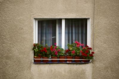 flowers, block, building, wall, zid, nature, beauty, soft, sensation, window