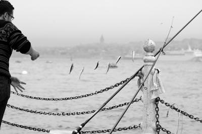 black and white, lifestyle, line, rope, seagul, fish, fly, sea, water, canal