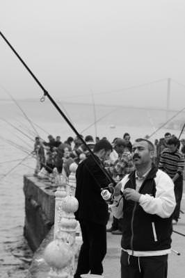 black and white, lifestyle, black and white, lifestyle, line, rope, seagul, fish, fly, sea, water, canal