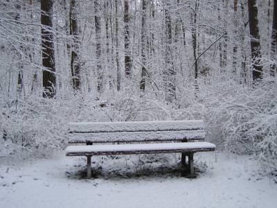 water, nature, green, verde, trees, copaci, plants, plante, natura, apa, iarna, snow, zapada, cold, frig, white, alb