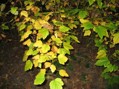 water, nature, green, verde, trees, copaci, plants, plante, natura, apa, iarna, snow, zapada, cold, frig, white, alb, leaf, leaves, frunze, culoare, colors