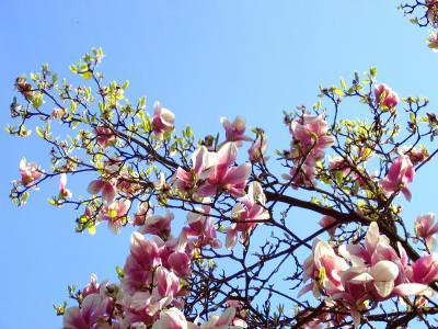spring, primavara, natura, nature, flowers, tree, flori, copaci, warm, cald, sun, soare, cer, blue, sky, albastru, colors, culori
