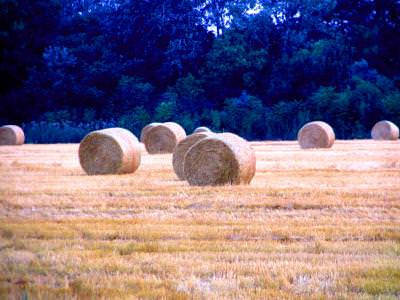 bale, packet, hay, agriculture, field, shape, round, circle, balot, fan, pachet, rotund, cerc, forma, camp