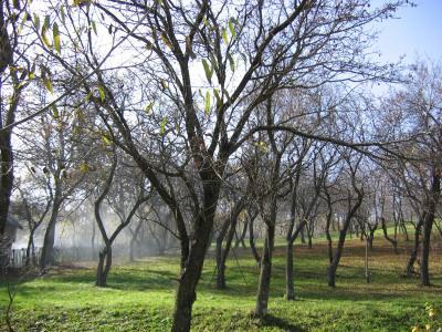 Secaria, livada, toamna, munte, mountains, autumn, cer, blue, sky, albastru