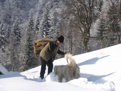 old, man, nature, winter, dog, animal, caine, natura, zapada, frig
