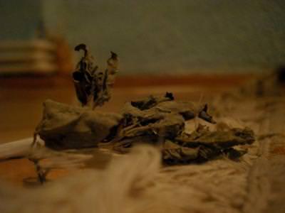 leaf, frunza, dead, death, autumn, toamna, dust, die, falling, fallen, ground, pamant, tired, old, obosit,