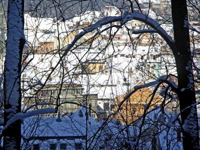 winter, snow, trees, flags, cold, white, iarna, zapada, brad, brazi, alb, frig