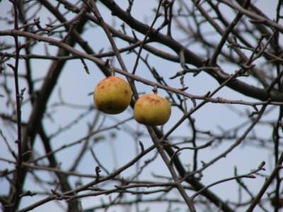 fruits, autumn,toamna, lonelines, alone, cold, sky, cer, blue, albastru, nature, frig
