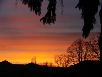 sunset, bloody, red, nature, sky, leaves, nature, armaghedon