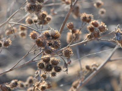 thorns, spini, autumn, iarna, cold, tree, hanging, pest