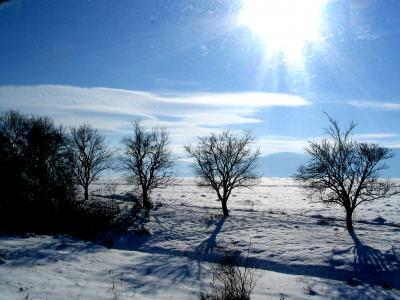 winter, sun, soare, iarna, zapada, lifeless, snow, alb, stralucitor, cold, trees, brances,copaci, cer, albastru, cer, blue sky