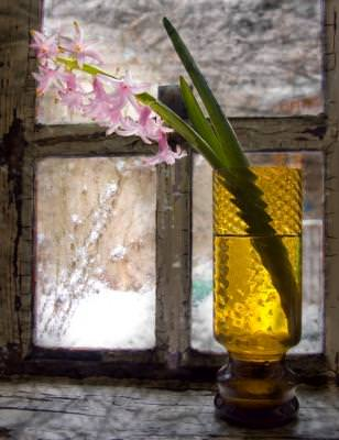 fereastra, window, waitting, spring, asteptare, flower, fereastra, floare