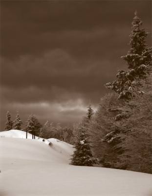zapada, munte, brazi, winter, trees, black, white, mountains
