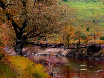 autumn, fall, water, bridge, tree, nature, september, toamna, apa, pod, copac, pom, septembrie