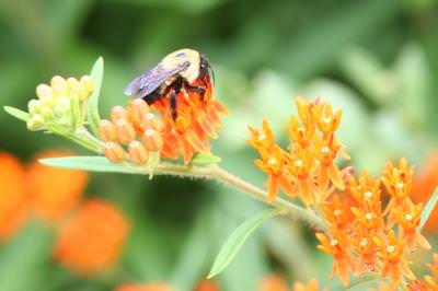 bee, nature, garden, flowers, muguri, blissful, bloom, wasp, pollen, gathering, collecting, honey