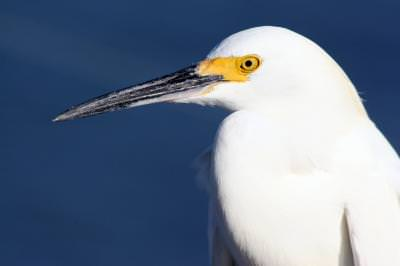 Daytona Beach, Florida, USA. A bird, likely, heron,pasare, animal,