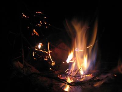 fire, wood, pine, foc, padure, lemn, lemne, brad