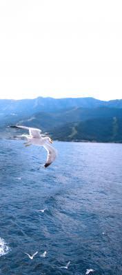 sea, grece, thassos, water, mare, ocean, apa, summer, hot, warm, sunset, apus, soare, sun, grecia, island, insula, vacanta, holiday, landscape, panorama,, pescarusi, pasare, bird, fly, hover,