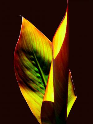 textura,frunza,natura,planta,detaliu,verde, greem ,plant, leaf, leaves, detail, texture