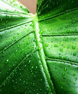frunza, planta, natura, apa, detaliu, macro, leaf, nature, detail, rain, ploaie