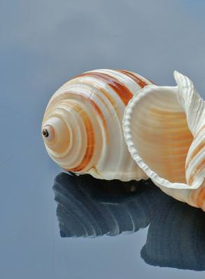 natura, animal, decoratiune, detaliu, mare, apa, clam, shell, sea, decorations
