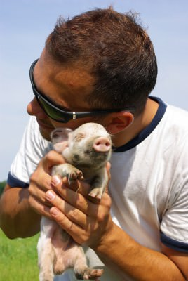 man, pig, young, summer, green, pasture, fields, blue sky, white t-shirt, sun glasses, snagov, caldarusani, bucharest, animal,