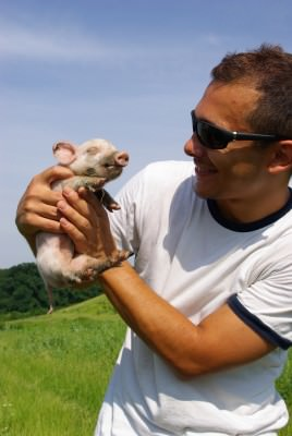 man, pig, young, summer, green, pasture, fields, blue sky, white t-shirt, sun glasses, snagov, caldarusani, bucharest,