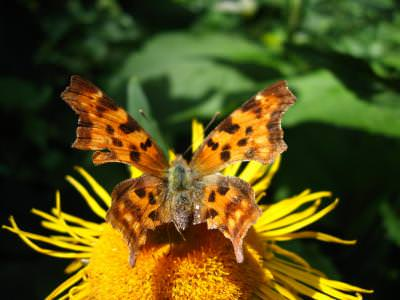 fluture, butterfly, animal, insect, flower, camp, filed, nature, natura, flower, sun, yellow, green, colors