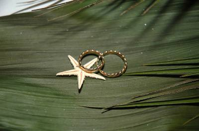 wedding, rings, palmtree, green, marriage, event, starfish, gold, aur, inel, casatorie, uniune, verde, eveniment