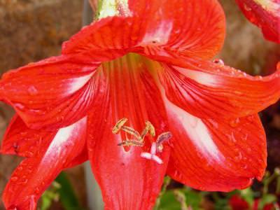 flower, floare, natura, nature, soft, gingas, color, culoare, pink, green, verde, red, rosu