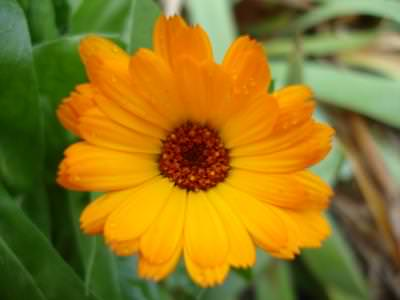 floareasoarelui, peisaj, cer, albastru, soare, planta, natura, camp, verde, contrast, colorat, sun, flower, nature, blue, sky, cer, albastru, yellow, colors, plant, field, green,