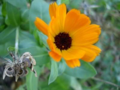 floareasoarelui, peisaj, cer, albastru, soare, planta, natura, camp, verde, contrast, colorat, sun, flower, nature, blue, sky, cer, albastru, yellow, colors, plant, field, green,muschi,