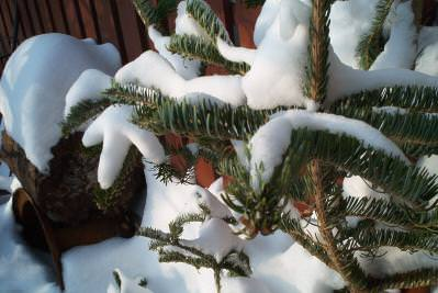 winter, zapada, cer, blue, sky, turturi, streasina, tree, copac
