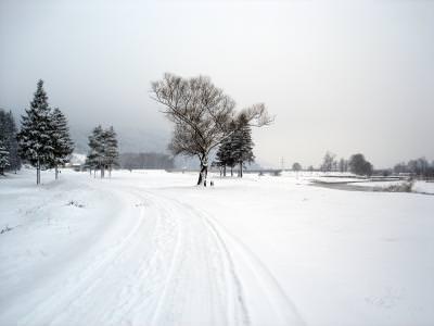 winter, trees, nature, cold, zapada, snow,