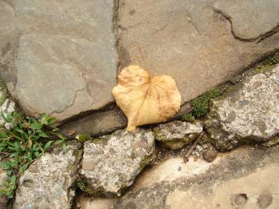 leaf, autumn, heart, frunza, toamna, inima, abstract,
