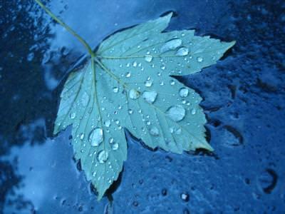 autumn, leaves, drops, water, rain, toamna, frunza, apa, ploaie, picaturi, nature, natura, rain,