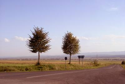 road, trees, sky, cer, blue, copaci, nature, wild, outside, road, way,