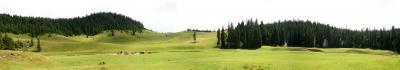 nature, Apuseni, mountains, hills, fir, trees, grass, green, panorama, horses, cai, natura, munti, dealuri, brad, brazi, copaci, iarba, verde