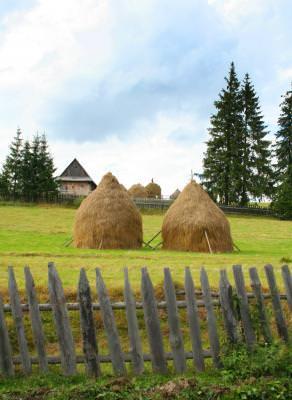 haycock, hayrick, hay, rural, two, yard, fence, people, work, village, grass, capita, claie, capite, doi, doua, sat, oameni, munca, iarba, gard, curte
