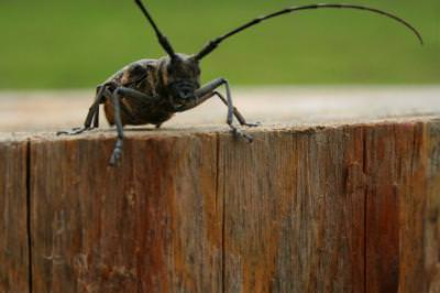 bug, insect, feeler, small, cockroach, wood, log, insecta, gaza, gandac, bustean, busteni, lemn, mic