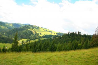 mountains, view, green, grass, fir, trees, sky, munti, vedere, verde, cer, iarba, brad, brazi, summer, vara, copaci
