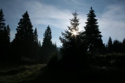 mountains, dark, sky, sun, fir, trees, shine, munti, intuneric, cer, soare, stralucire, brad, brazi, copaci