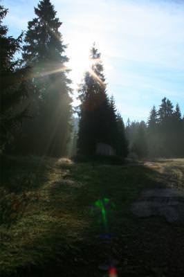 mountains, wood, sun, fir, trees, lights, tale, munte, noapte, padure, poveste, soare, brad, brazi, lumini