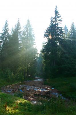 wood, mountains, wood, sun, fir, sunshine, trees, lights, tale, munte, noapte, padure, poveste, soare, raza, brad, brazi, lumini, padure, lemn