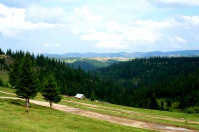 country ,rural, mountain, road, houses, wood, trees, tara, drum, munte, casa, padure