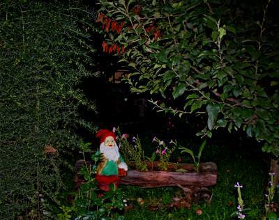 tale, story, wood, night, beer, drink, dwarf, manikin, midget, Lilliputian, log, plants, tree, enchanced, pitic, poveste, padure, fermecata, bustean, basm, plante, copac, bere, noapte, bea