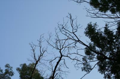 branches, trees, sky, distribution, night, up, high, ramuri, crengi, copaci, cer, distributie, noapte, sus, inalt