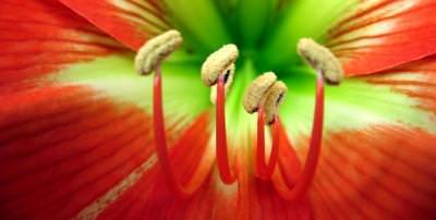 floaral, peisaj, cer, albastru, soare, planta, natura, camp, verde, contrast, colorat, sun, flower, nature, blue, sky, cer, albastru, yellow, colors, plant, field, green, muschi, nature, leaf, frunze, petals, garden, nice, yellow, green, soft, calm, edge, enjoyment, environment, exhilarating, exciting, free, landscape, high, height, tranquil, bloom, nice, colors, summer, vara, sping, primavra, autumn, season, day, color, bright, bloom, blissfull,