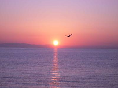 Sunrise,Greece seaside,Paralia Katerini,Seagull