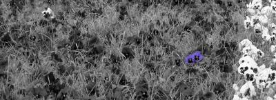 floaral, peisaj, cer, albastru, soare, planta, natura, camp, verde, contrast, colorat, sun, flower, nature, blue, sky, cer, albastru, yellow, colors, plant, field, green, muschi, nature, leaf, frunze, petals, garden, nice, yellow, green, soft, calm, edge, enjoyment, environment, exhilarating, exciting, free, landscape, high, height, tranquil, bloom, nice, colors, summer, vara, sping, primavra, autumn, season, day, color, bright, bloom, blissfull,black, white, alb, negru